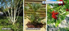 18 Ιδιαίτερα Δέντρα για να Μεταμορφώσετε Ευχάριστα έναν Μικρό Κήπο  την Αυλή Σας ! - share24.gr Vegetable Garden Design, Garden Landscaping, Backyard, Landscape, Architecture, Barbecue, Flowers, Plants, Houses