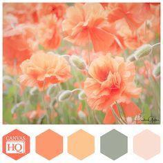Coral hues inspired by photographer Paula Goff