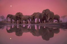 #Elephants at twilight.  #HappyAlert via @HappyHippoBilly