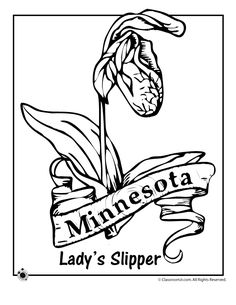 State Flower Coloring Pages Minnesota State Flower Coloring Page – Classroom Jr.