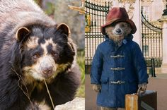 The Real Paddington Bear: Cute, Unique and Endangered  quote context: http://pllqt.it/GH36gv