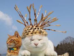 つくしんぼ |のせ猫オフィシャルブログ Powered by Ameba