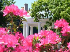 Springtime at UNC Chapel Hill