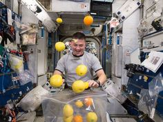 NASA astronaut Kjell Lindgren corrals the supply of fresh fruit that arrived in August 2015 on the Kounotori 5 H-II Transfer Vehicle (HTV-5.)