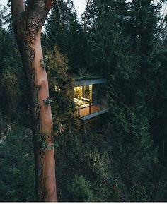 """""""Breathe easy. Trees trees trees. """"  @fursty  #treehouseclub"""