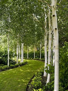 Beautiful Garden path with Trees