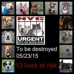 TO BE DESTROYED 05/23/15 - To rescue a Death Row Dog, Please read this:http://information.urgentpodr.org/adoption-info-and-list-of-rescues/ To view the full album, please click here: http://nycdogs.urgentpodr.org/tbd-dogs-page/ - Click for info & Current Status: http://nycdogs.urgentpodr.org/to-be-destroyed-4915/