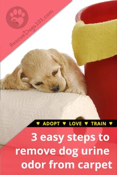 How to get dried dog urine out of carpet #dogs #dogheatlh #puppy #housecleaning #rescuedogs101 Dog Pee Smell, Puppy Potty Training Tips, Rescue Puppies, Dog Urine, Foster Dog, Dogs And Kids, Dog Owners, Dog Mom, Your Dog