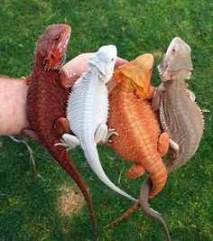Colorful little dragons