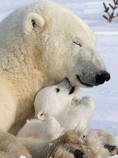 S urso polar, brown bear, animal photography, funny animals, cute baby anim Cute Baby Animals, Animals And Pets, Funny Animals, Beautiful Creatures, Animals Beautiful, Niedlicher Panda, Baby Panda Bears, Bear Cubs, Love Bear