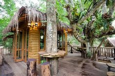 thailand tree house - Google Search