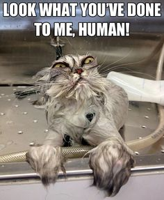 This is so what my cat thinks when i bathe him!