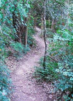 Cameron Park, Waco, Texas.  Shady trail.     Photo by pcochrum via Flickr.