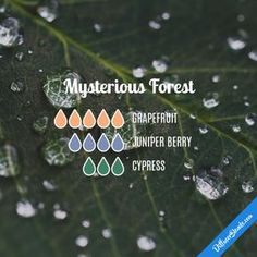 Mysterious Forest - Essential Oil Diffuser Blend