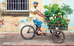 A street vendor in Santo Domingo, Dominican Republic - Simon Reeve: The Caribbean uncovered - Telegraph Street Vendor, Samana, Punta Cana, Dominican Republic, Savannah Chat, Caribbean, Adventure, Painting, App