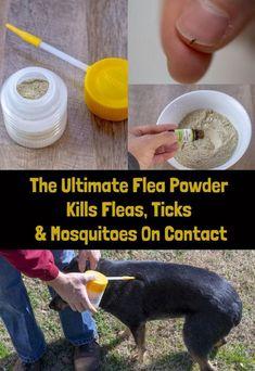 The Ultimate Flea Powder Kills Fleas, Ticks, Mosquitoes On Contact - Animals Flea Powder For Dogs, Flea Spray For Dogs, Flea And Tick Spray, Kill Fleas On Dogs, Ticks On Dogs, Dog Flea Remedies, Flea Remedy For Dogs, Killing Fleas, Sun