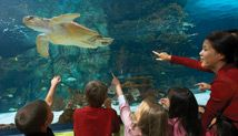 Visit the Newport Aquarium during the 92 days of summer, www.92days.org.