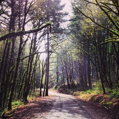Peavy Arboretum Trail in Corvallis, Oregon - great place for hiking and biking!