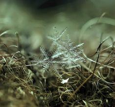 snow crystal ... macrosnow-4 Photograph by Andrew Osokin ... beauty ... <3 www.24kzone.com