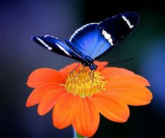 """""""Beauty and the Butterfly"""""""