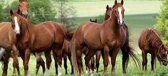 Ψυχοθεραπεία με άλογα – θεραπευτές