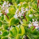10 ανθεκτικά φυτά για μπαλκόνι | Τα Μυστικά του Κήπου Plants, Plant, Planets