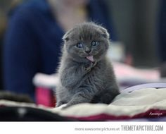 Suspicious kitten