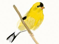 marauderfan:  Made with Goldfinch   Lovely thanks for sharing...
