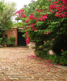 red bouganvillea in the patio by patricia malmierca landscape arch