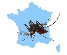 Signalez la présence d'un moustique-tigre à proximité de chez vous !