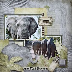 Can you believe what was in the pile of mail when i returned from South Africa. A box full of the Zoology collection from Bobunny . Travel Scrapbook Pages, Scrapbook Page Layouts, My Scrapbook, Scrapbooking 101, Zoology, Zoo Animals, Making Ideas, Wet Weather, Animal Kingdom