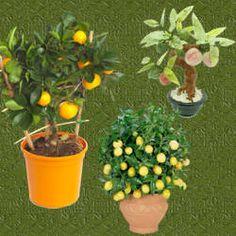 Plantas para jardines exteriores para m s informaci n ingresa en - Ahuyentar moscas exterior ...