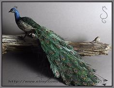 OOAK Dollhouse Miniature Indian Peacock Hand Flocked Animal at $150. Note use of liquid sculpy for legs (over wire) seller artist gives nice detail about her method