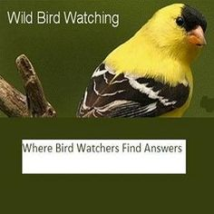 Begin building bird houses to attract some of the 50 different birds that nest in man-made nest boxes. Discussion of materials, chart of dimensions for building bluebird, Wren, Robins houses and More
