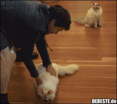 Rotierender Mop :) | Lustige Bilder, Sprüche, Witze, echt lustig
