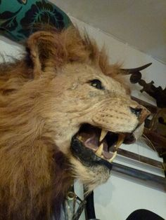 """Democrats Leap Into Action... Introduce """"Cecil Act"""" After Outcry Over Poached Lion - The Gateway Pundit"""