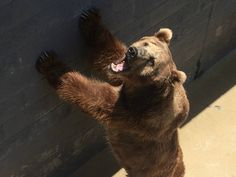 A flood in Russia's Far East means an uncertain fate for bears in a zoo.