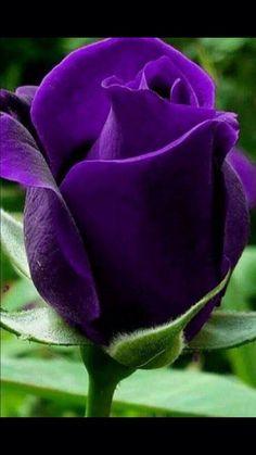 — premsaral:   Source: somethings to say #flowers