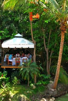 River Cafe restaurant over the Cuale River. Great dinner place. We sat in this private cabana out back. If you look close, you can see iguanas along the river! They are climbing the trees, YIKES!