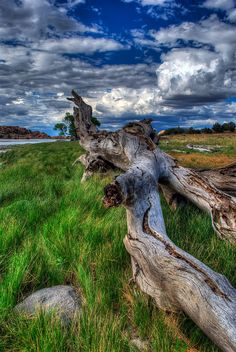 Driftwood at Watson Lake, Arizona, USA