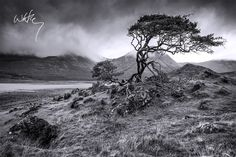 """Highland Wither"" - Isle of Skye, Scotland Landscape Photos, Landscape Photography, Nature Poem, Landscaping Images, Lone Tree, Black And White Landscape, Black And White Photography, Around The Worlds, Country Roads"