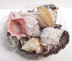 Lion's Paw Seashells Net Bag - Assorted Shells - California Seashell Company