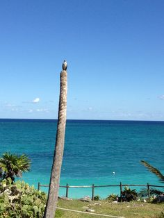Tulum, #QuintanaRoo, #Mexico.