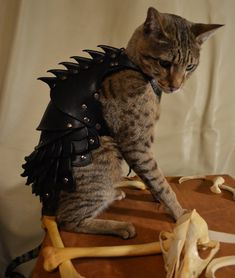 The scattered bones and skulls really make the tableau, no? LOLOL [Cat Battle Armor by schnabuble on Etsy $500+]
