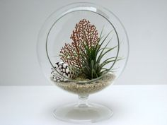 Footed air plant terrarium with shell - Decoist