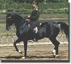 Ivan Kalita mit Absent, Mexiko 1968