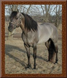 Twister - he is just so pretty!