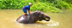 Thaïlande - Thai Elephant Conservation Center A voir ici : http://vetcaetera.com/2013/07/02/thai-elephant-conservation-center/