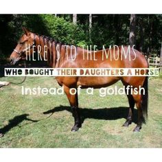 Here's to the moms who bought their daughters a horse instead of a goldfish Cowgirl And Horse, My Horse, Horse Girl, Horse Show Mom, Show Horses, Most Beautiful Animals, Beautiful Horses, Paws And Claws, Horse Quotes