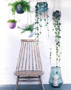 Carnet d'idées : plante suspendu, plantes retombantes : événement jardinerie Truffaut